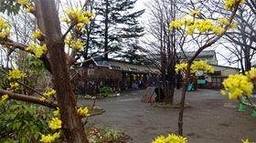 ★幼稚園@川越市・ふじみ野市・さいたま市DSCF9609