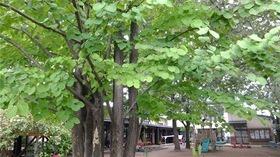 ★幼稚園@川越市・ふじみ野市・さいたま市DSCF4576