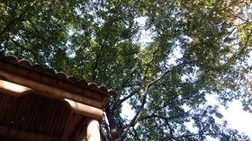 ★幼稚園@川越市・ふじみ野市・さいたま市DSCF4797