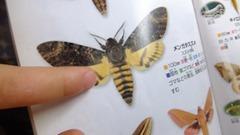 DSCF3812■